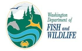 Washington state granting cougar hunts using hounds