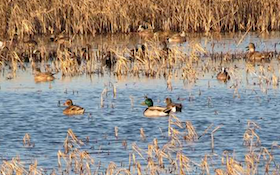 6 Honored With Ducks Unlimited Wetland Conservation Achievement Awards