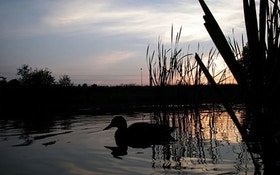 Arkansas Wants to Limit Non-Resident Waterfowl Hunters