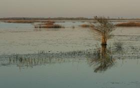 Bounty on nutria helps reduce Louisiana wetland damage