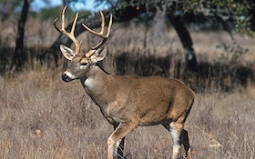 Indiana Deer Hunters Could Use Rifles Next Year