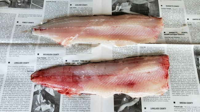 The Benefits of Bleeding Out Fish