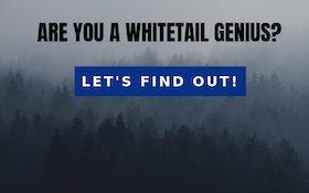 Take the Whitetail Quiz!