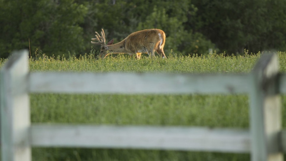 Eye Openers for Opening-Week Whitetails