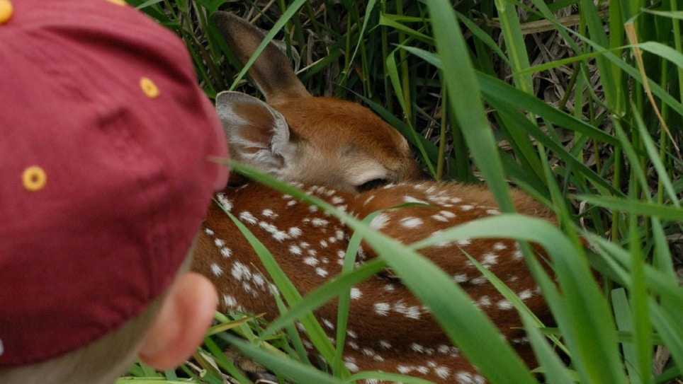Why So Many Whitetail Fawns Die Each Spring