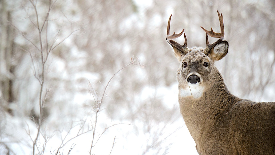 Q & A: How Do Deer Survive Harsh Winter Weather, While Hunters Freeze Their Buns Off?