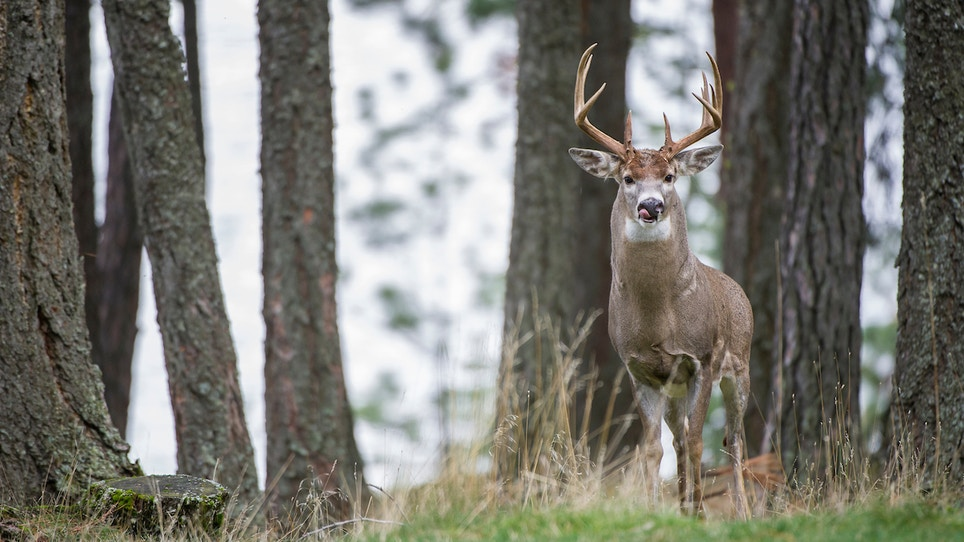 2018 report: deer hunting trends