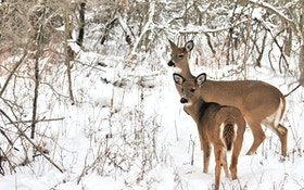 4 steps to late-season hunting success