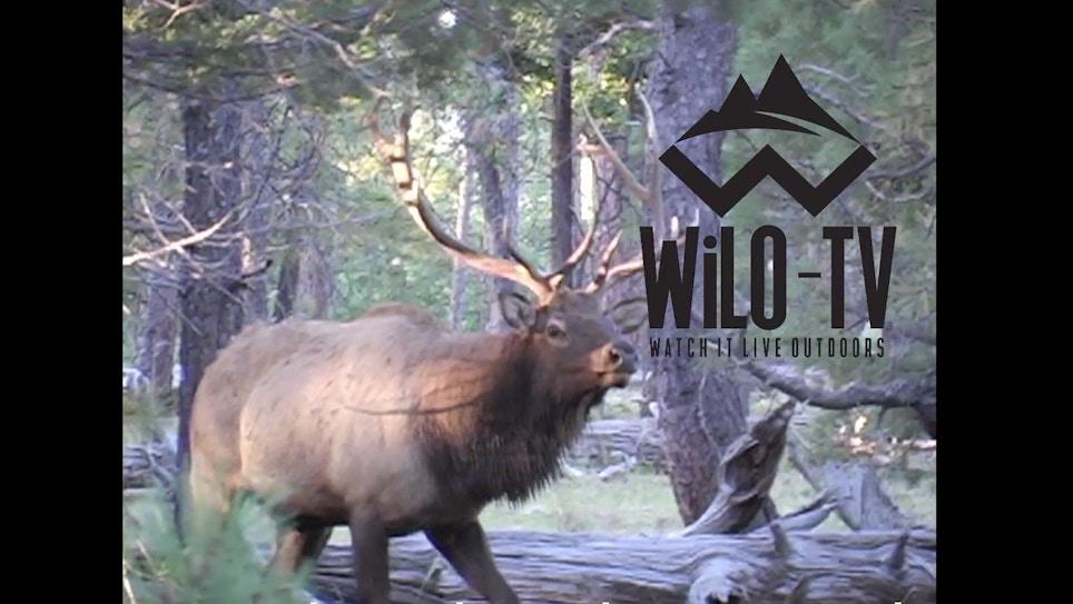 WiLO-TV App
