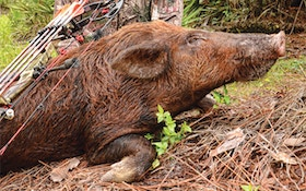 Wild Hogs Threaten Mississippi Economy