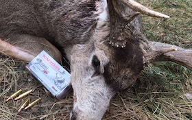 Testing Winchester Deer Season XP On Big-Bodied Alberta Bucks