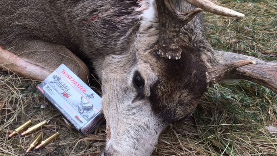 Testing Winchester Deer Season XP On Big-Bodied… | Grand