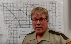 Wolves killing dozens of cows, and this sheriff doesn't like it