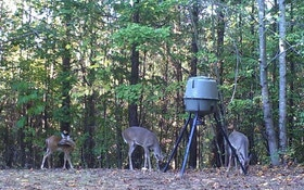 When To Bait Deer With Man-Placed Feed