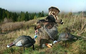 Bowhunting turkey strategies