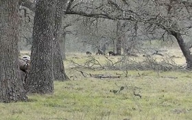 VIDEO: Spot and stalk hog hunting