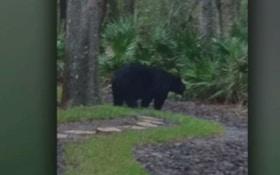 VIDEO: Bear Attacks Florida Woman Near Her Garage