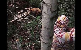 7 hard-earned bear hunting tips