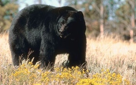 Are You Making These Bear-Baiting Mistakes?
