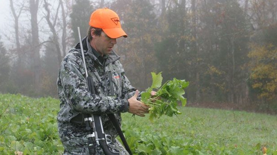 Hunting or Nutrition: Not All Plants Are Created Equal—Part 2