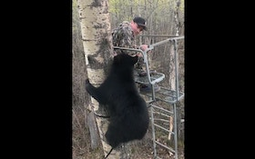 Fun Friday Video: Alberta Black Bear Climbs Youth Hunter's Ladder Stand