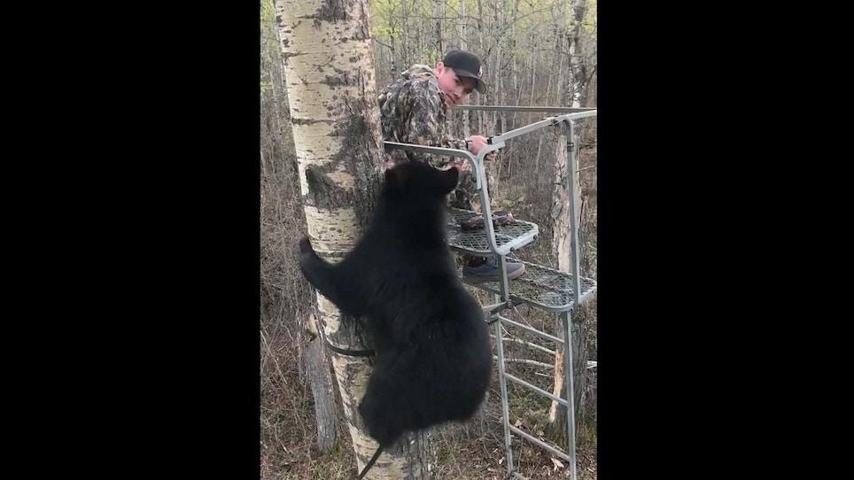 Fun Friday Video: Alberta Black Bear Climbs Youth Hunter's Ladder Stand