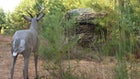 Blind Spots for Whitetails
