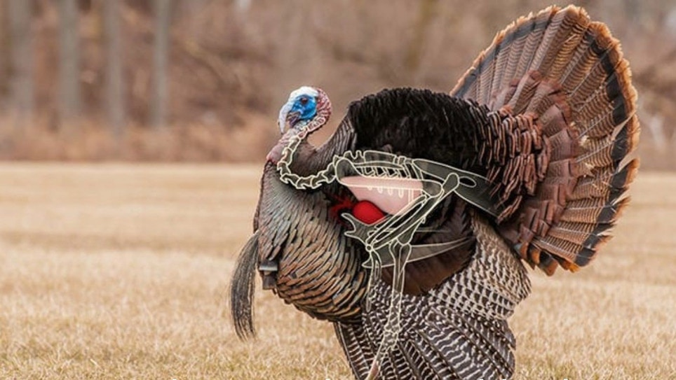 Body-Shot Arrow Placement on Wild Turkeys