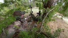 Self-Filmed Video: Bowhunting Turkeys Without a Blind