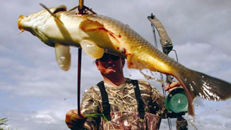Isn't It Time You Tried Bowfishing?