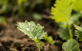 Create Deer Food Plot Sanctuaries