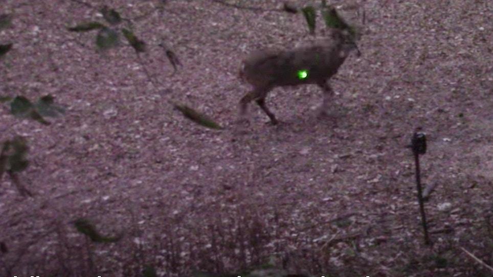 Video: 220-inch Kansas Buck Provides Lesson in Deer Anatomy