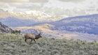 Bowhunting Wilderness Public Land Elk