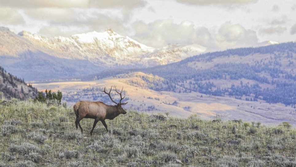 Bowhunting Wilderness Public Land Elk