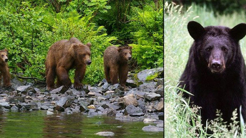 Hunting and Camping Safely in Bear Country