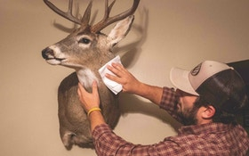 How to Care for Taxidermy Mounts