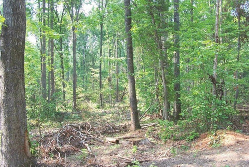Thinning or clearing stands of mature timber produces more food for all deer, but it also creates better fawning and escape cover.