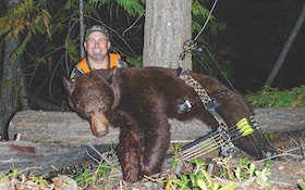 Spot-And-Stalk Black Bears — With a Bow