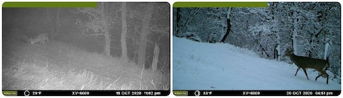 Some whitetail hunters believe that mature bucks won't move on a fresh snowfall. These two trail cam pics bust that myth.