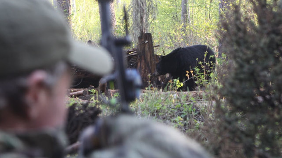 Three Ways To Hunt Black Bears