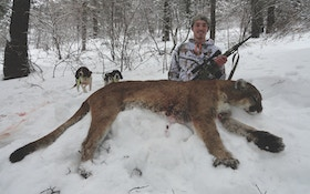 New Mountain Lion Management Plan In The Works