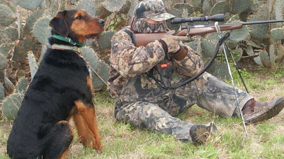 Training A Coyote Decoy Dog: The Early Days