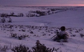 VIDEO: Successful coyote hunting may take long stands