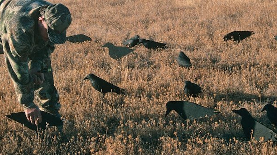 Sharpen Your Shooting Skills by Crow Hunting