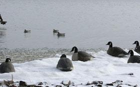 Three Favorite Big-Water Duck Spreads