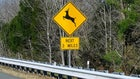 6 Tips for Avoiding a Vehicle/Deer Collision