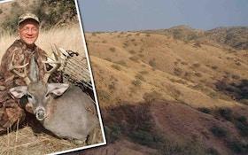 Coues Deer Of The Desert