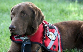 Famous duck hunting dog monitors his owner's health