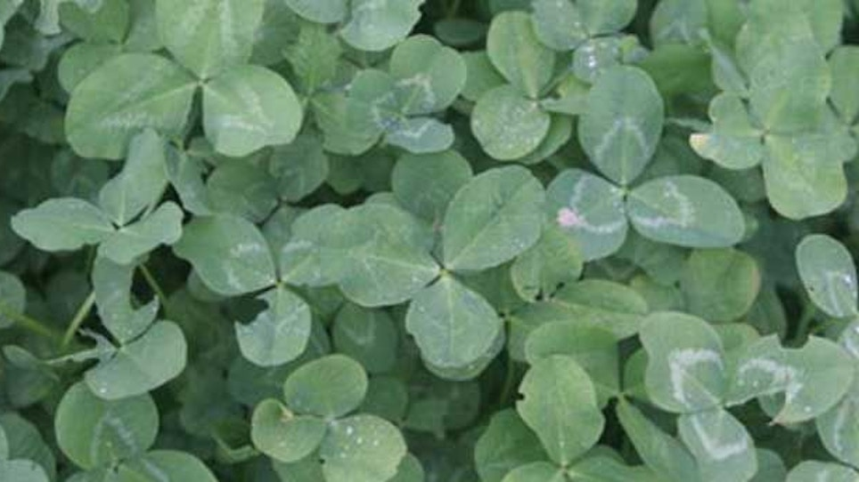 Knowing your dirt is crucial for food plot success