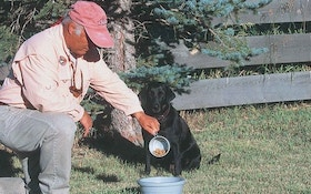 Choosing Dog Food for Your Sporting Dog